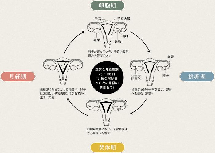 妊娠のメカニズム